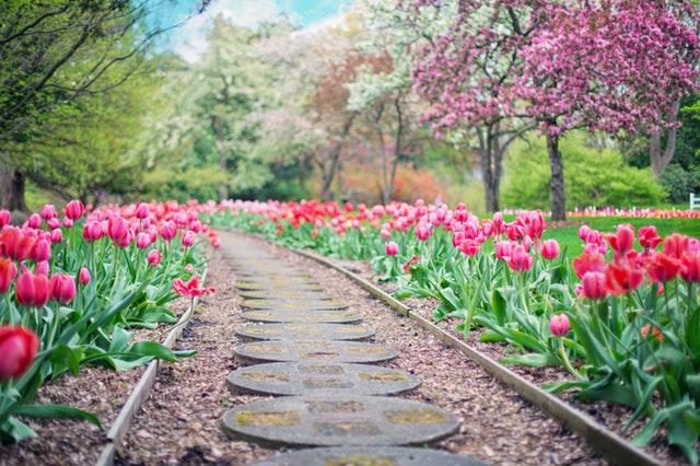 Jaki jest koszt założenia ogrodu?