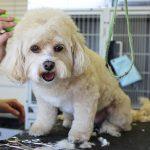 Jak reklamować swoje usługi dotyczące pielęgnacji psów w Internecie