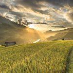 Środki niezbędne w ogrodzie i na polach uprawnych